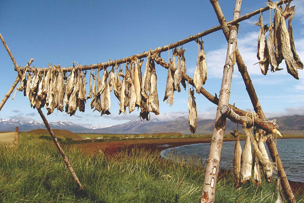 Pescado seco Islandia comida